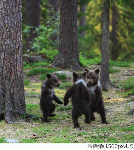 踊る小熊①
